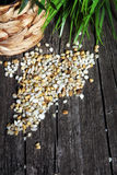 Maize grain Royalty Free Stock Photos