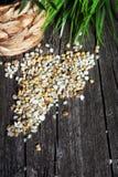 Maize grain Royalty Free Stock Photos