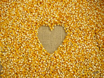 Maize grains background Stock Photos