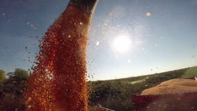 Maize Grains Dumping From Combine Harvester to Tractor Close Up stock video footage