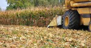 Maize harvest Royalty Free Stock Photography
