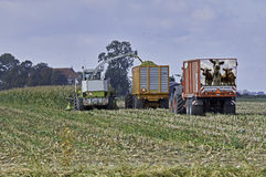 Maize harvest Royalty Free Stock Photos