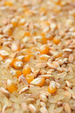Maize kernels and cereals Stock Images