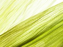 Maize leaves stock photos