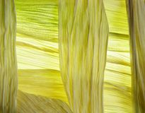 Maize leaves royalty free stock photography