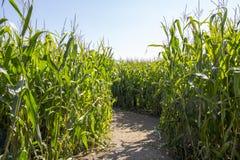 Maize Maze Stock Images