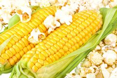 Maize and popcorn. Macro view of maize and popcorn Royalty Free Stock Images