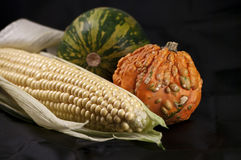 Maize and pumpkins Stock Photography