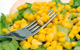 Maize salad Stock Images