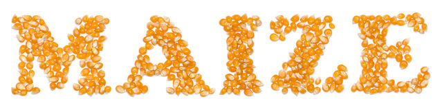 Maize script made of seeds Royalty Free Stock Image