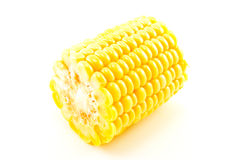 Maize Section. Cut section of a maize ear unwrapped and showing yellow kernels on a white background Stock Images