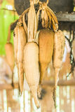 The maize seed Royalty Free Stock Images