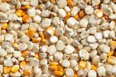 Maize seeds Royalty Free Stock Images