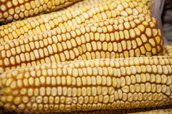 Maize Royalty Free Stock Photos