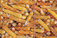Maize stock Royalty Free Stock Photography