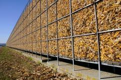 Maize Storage. Sweet corn stored in immense metal framework on farm Stock Image