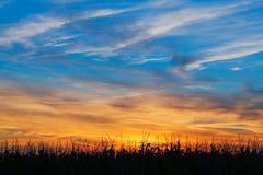 Maize at Sundown Stock Photo