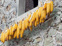 Maize, sweetcorn cobs hanging to dry in the sun. Stock Photo