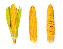 Maize in Three Growth Stages Royalty Free Stock Photos