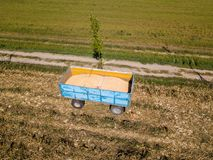 Maize trailer, corn harvesting from the field. Using a metal container, trailer Royalty Free Stock Images