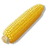 Maize vector Royalty Free Stock Photo