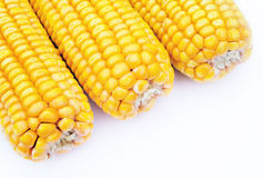 Maize on white background Royalty Free Stock Photography