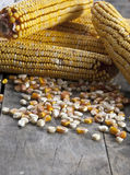 Maize on the wooden background Stock Images