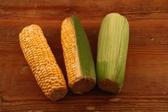 Maize on a wooden surface. Three cobs of corn in different stages of being peeled on a wooden surface with copy space Royalty Free Stock Images