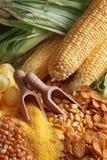 maizeprodukter royaltyfria foton