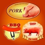 Majchery świniowaci Ilustracji