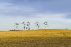 Majestätische einsame Bäume Stockfotos
