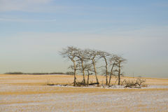 Majestätische einsame Bäume Lizenzfreies Stockfoto