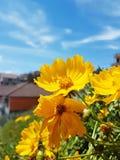 Majestätische gelbe Blume Lizenzfreies Stockfoto