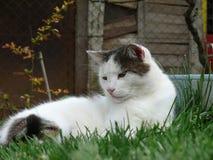 Majestätische Katze Stockfoto