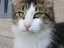 Majestätische Katze Stockfotografie