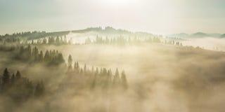 Majestätische Landschaft mit Wald Stockbild