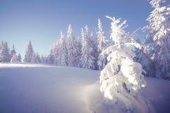 Majestätische Winterlandschaft Stockbilder