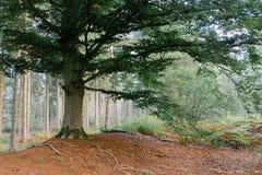 Majestätischer Baum Lizenzfreies Stockbild