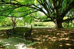 Majestätischer Baum in botanischem Garten Christchurchs, Neuseeland lizenzfreie stockfotos