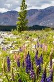 Majestätischer Berg mit den blühenden llupins, See Tekapo, Neuseeland Stockfotos