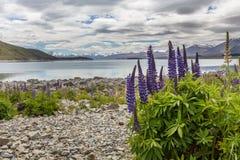 Majestätischer Berg mit den blühenden llupins, See Tekapo, Neuseeland Lizenzfreie Stockfotografie