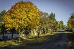 Majestätischer Herbstbaum durch verlassene Straße Stockfotos