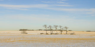 Majestätisches einsames Bäume Panorama Stockfoto