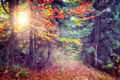 Majestätisk färgrik skog Royaltyfri Fotografi