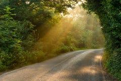 Majestätisk landsväg med guld- strålar av ljus Arkivbild