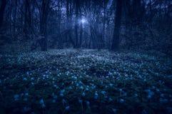 Majestätisk nattvårskog royaltyfri fotografi