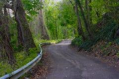 Majestätisk slingrig väg i skogen arkivbild