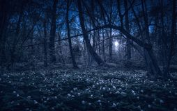 Majestätisk vårskog i ett måneljus royaltyfri bild