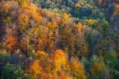Majestätiska färger av hösten Arkivbild