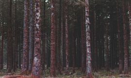Majestätiska skogsmarkträd Arkivbild